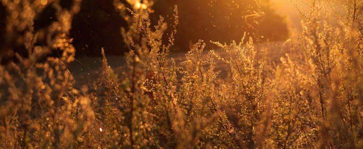 Photo de plantes.